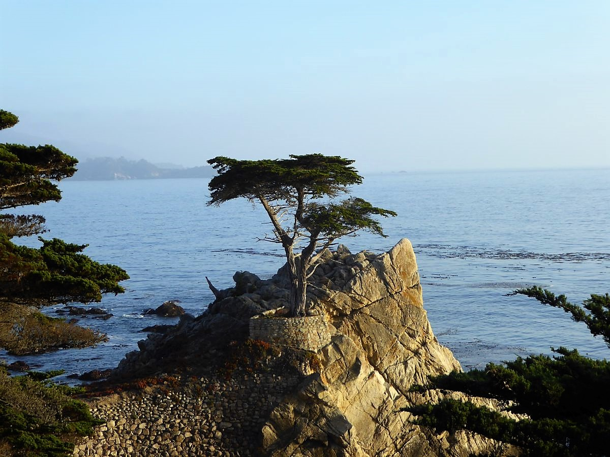 """The Lone Cypress"" auf dem 17-Mile Drive"