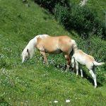Wunderschön: Fohlen mit Mutter