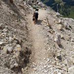 Mein Hund auf dem Steig :)