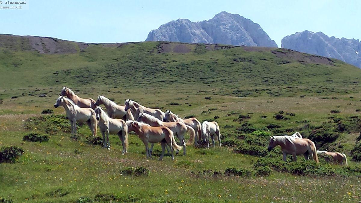 Photo of Reiten auf der Seiser Alm – Reiturlaub in der Heimat der Haflinger