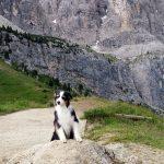 Mein Hund auf dem Joch
