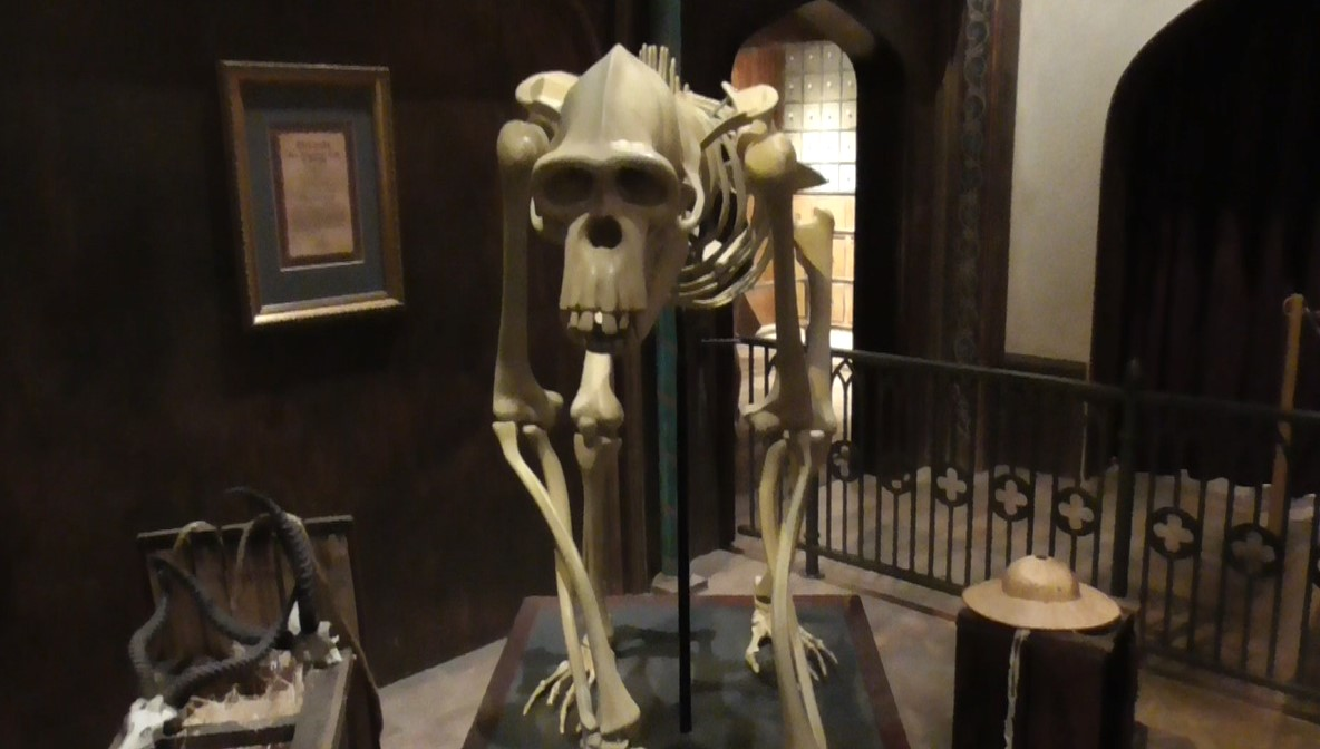 Skelett in der Attraktion Voletarium